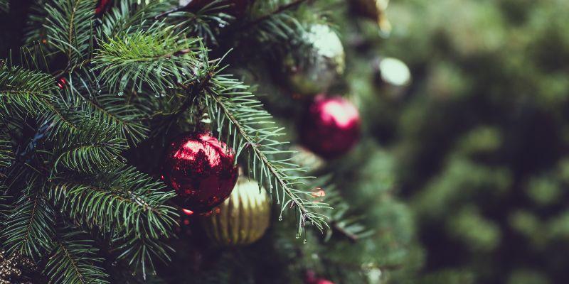 Common Christmas Tree Bugs