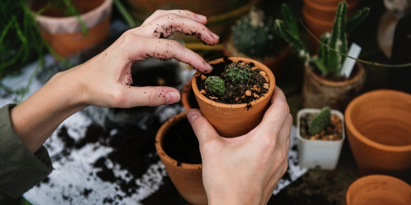 gardening-hacks-to-prevent-pests