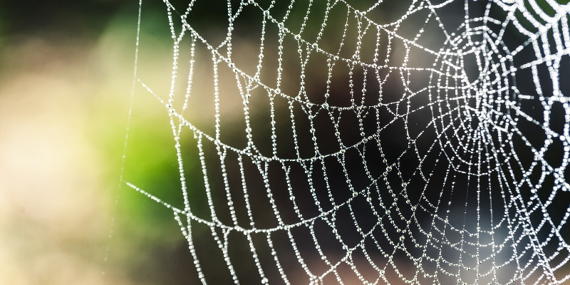 Identifying Spider Webs Around Your House