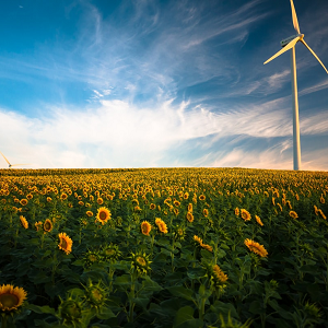 field of sunflowers with wind turbine and blue sky with white clouds