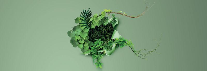 vegetation-header
