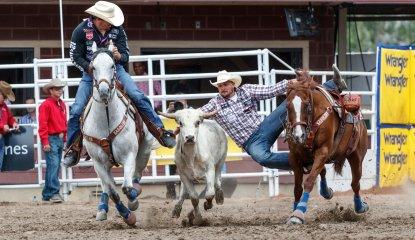 Steer Wrestling image bucket