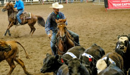 Team Cattle Penning Championships