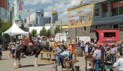 Draft Horse Town