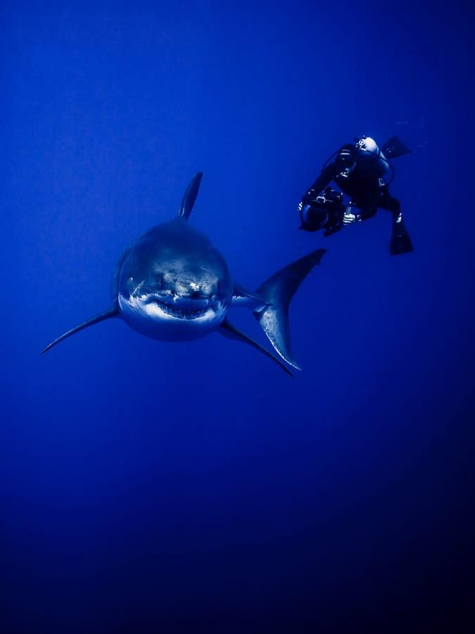 The sharks-3