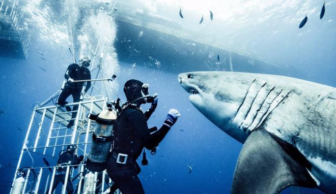 The sharks are free-range and Michael Muller is out of his cage…