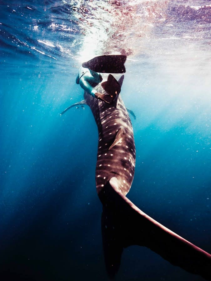 The sharks-4