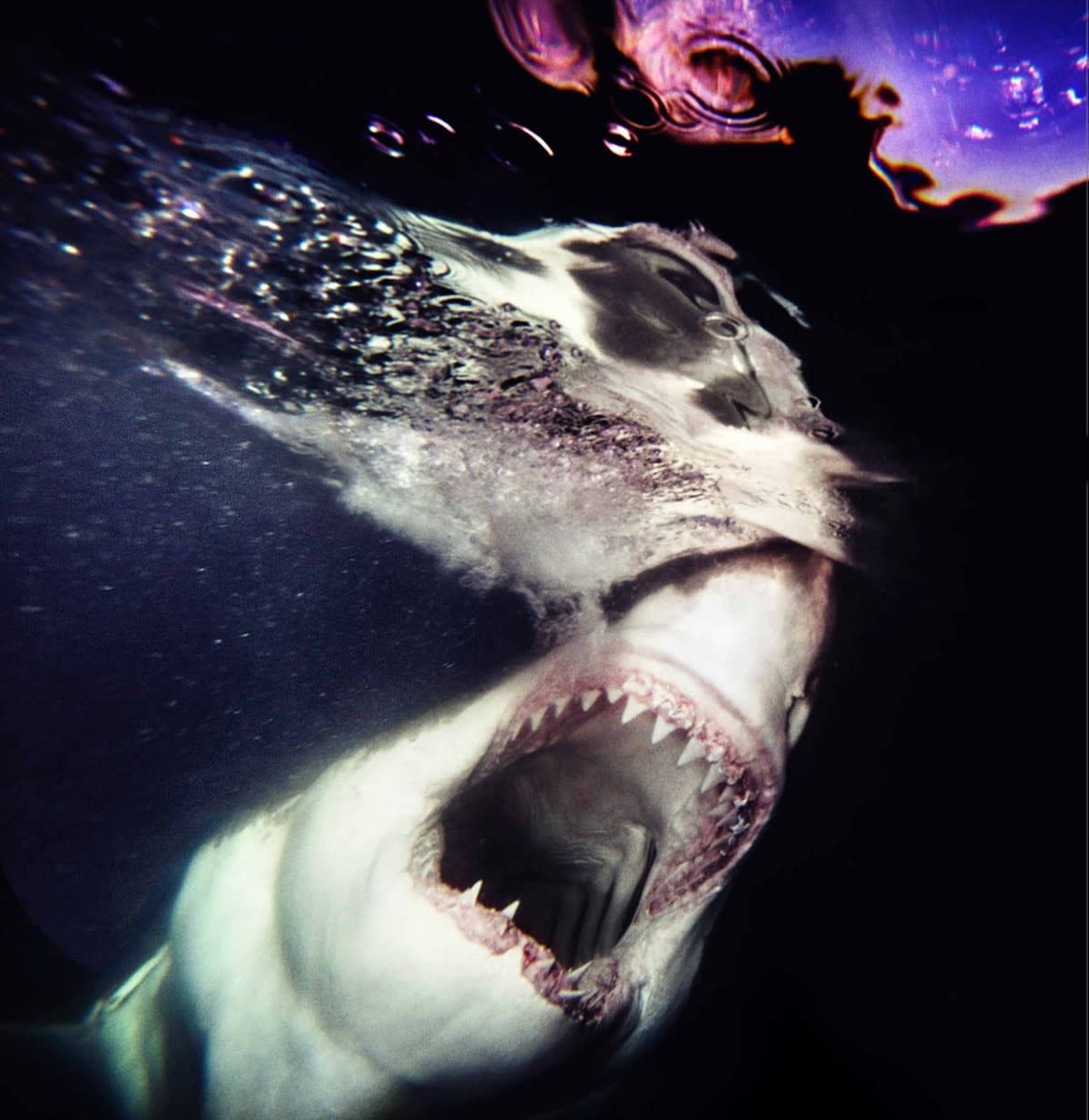The sharks-5