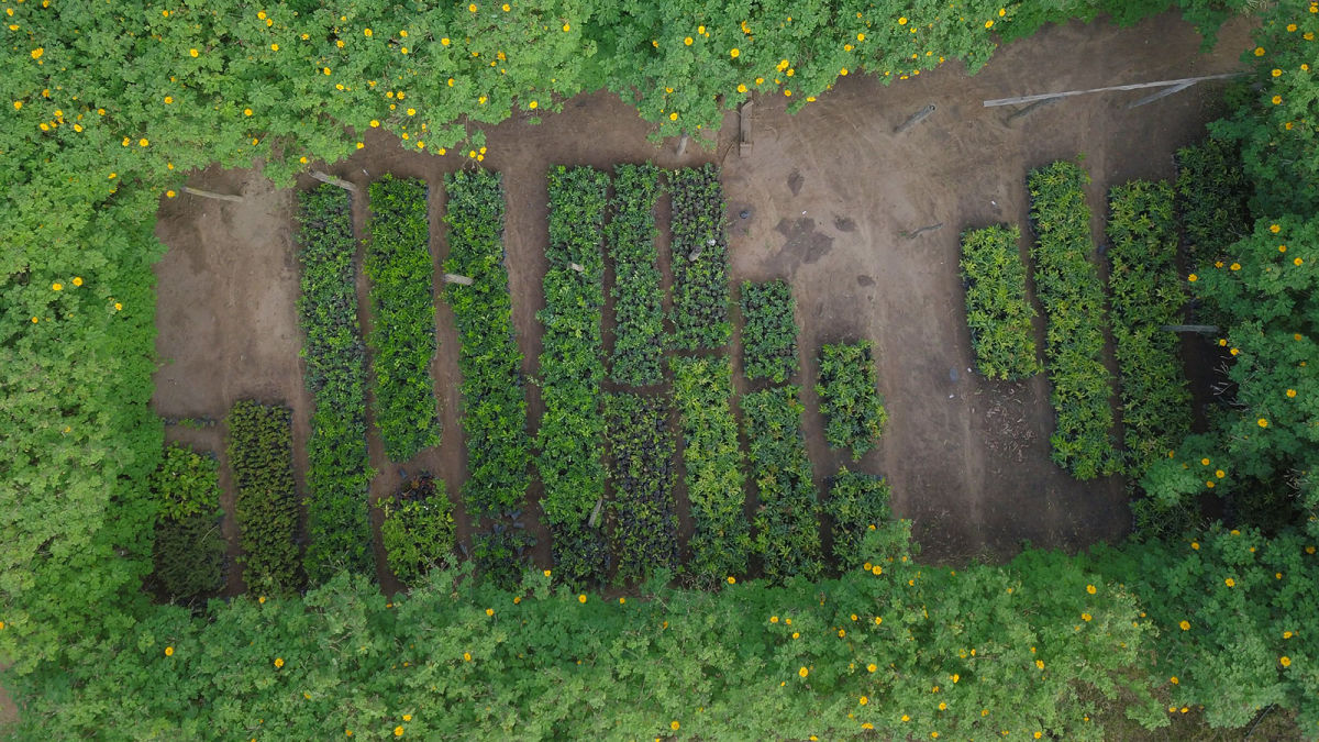 HEA BLO GEO drones-replanting-forests-malawi