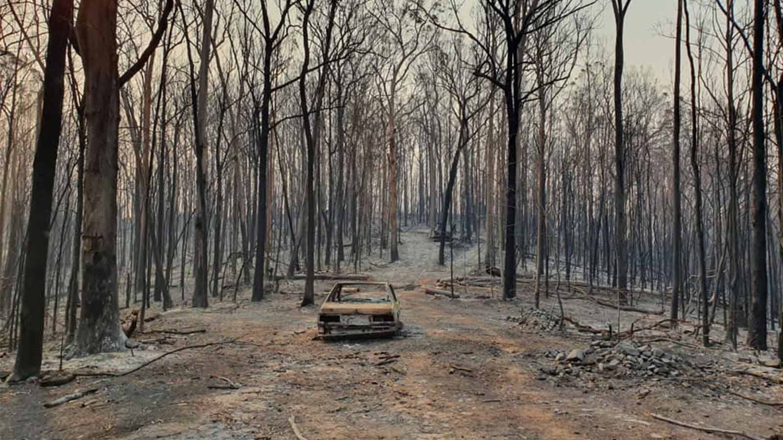 Burned out car surrounded by gum trees in the aftermath of the Australian wildfires