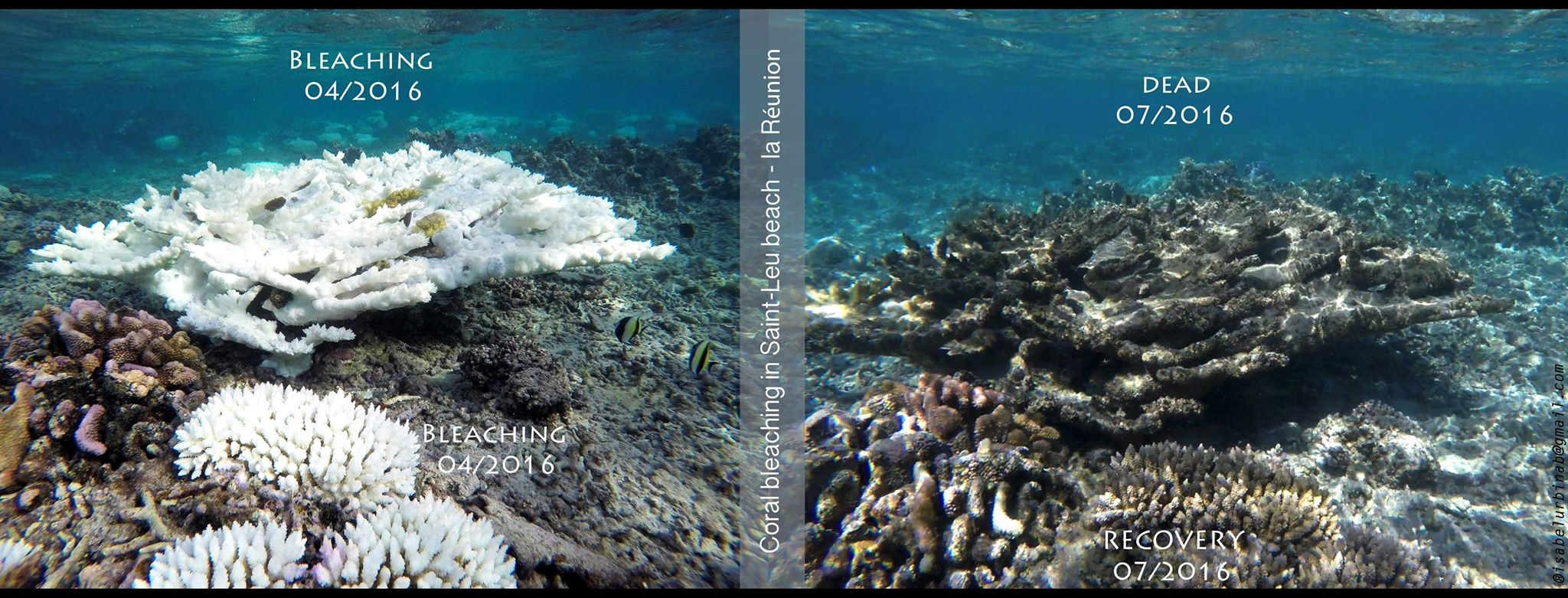 images showing bleached and dead coral.