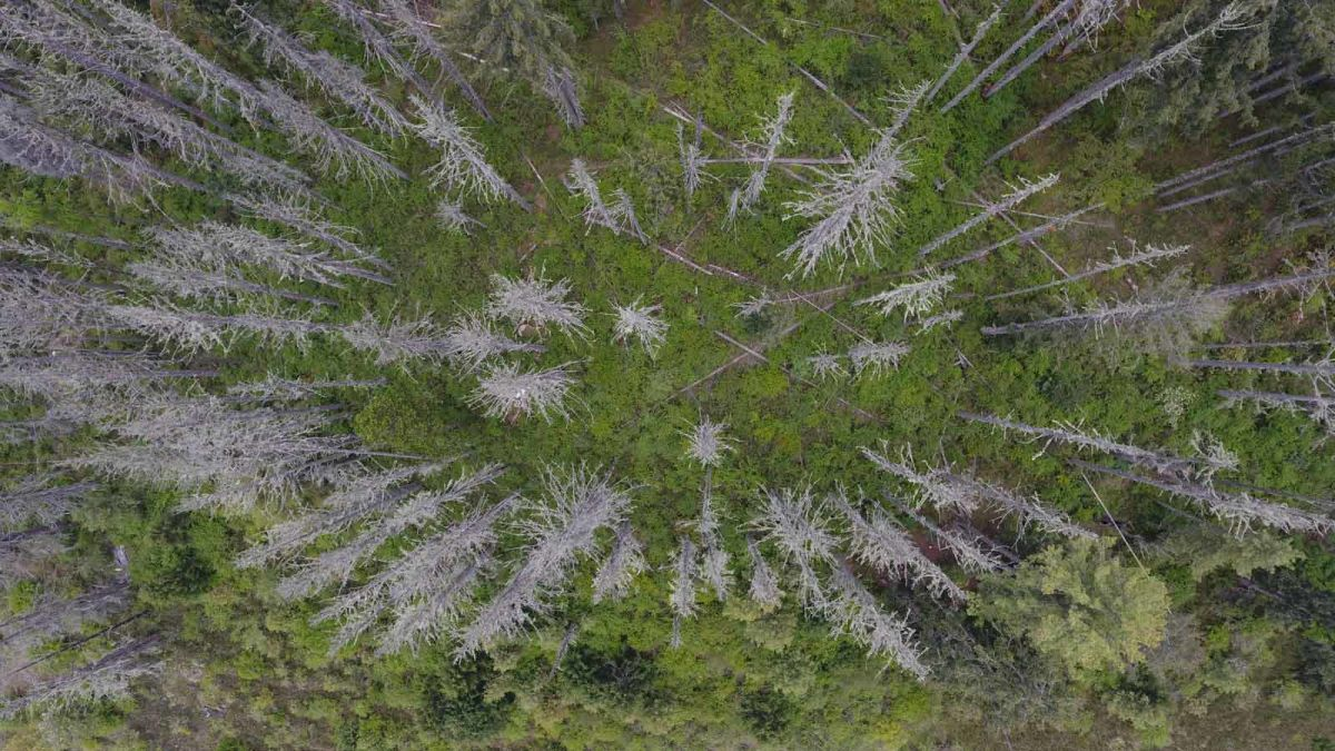 drone-image-of-a-forest