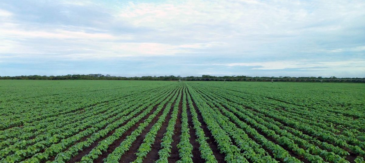 Pix4Dfields usecase MicaSense RedEdge irrigation soy