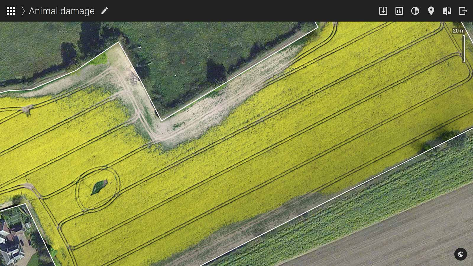 precision agriculture orthomosaic of a canola field