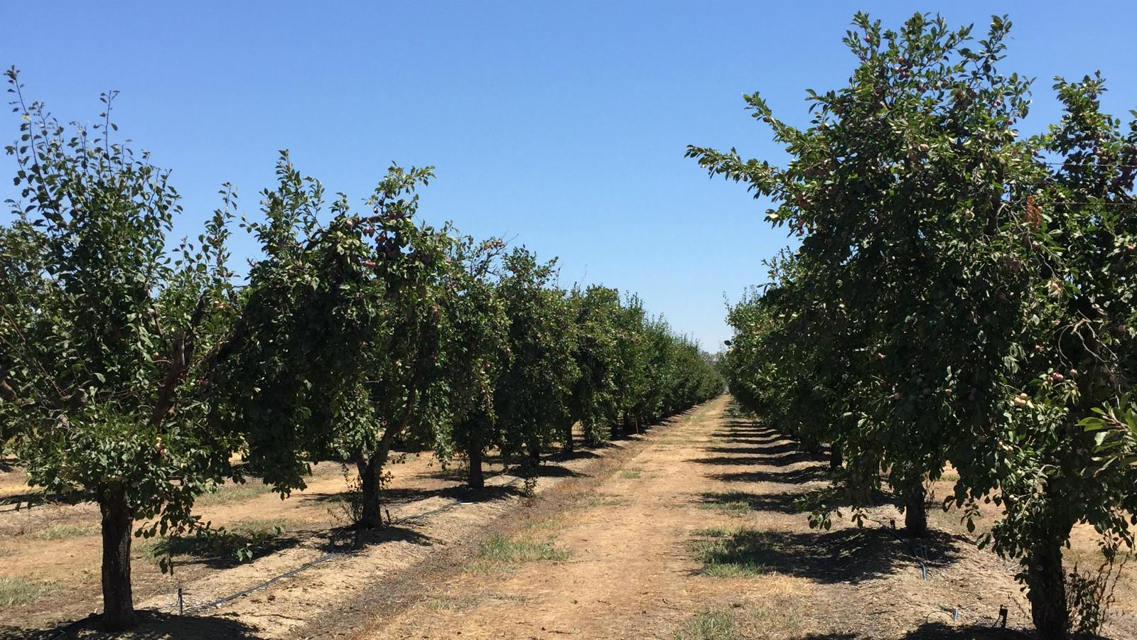 Pix4fields Agriculture Roadshow Yuba City