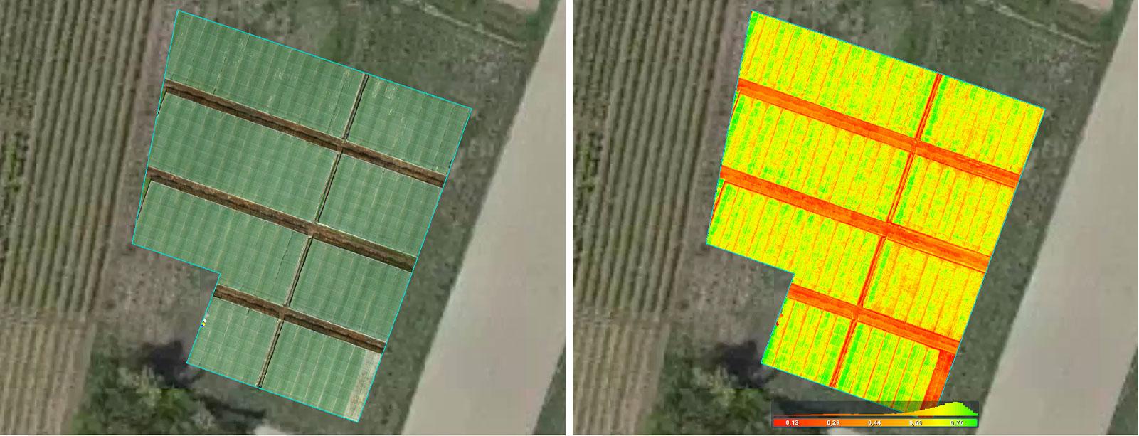 strawberry nursery mapping in Pix4Dfields