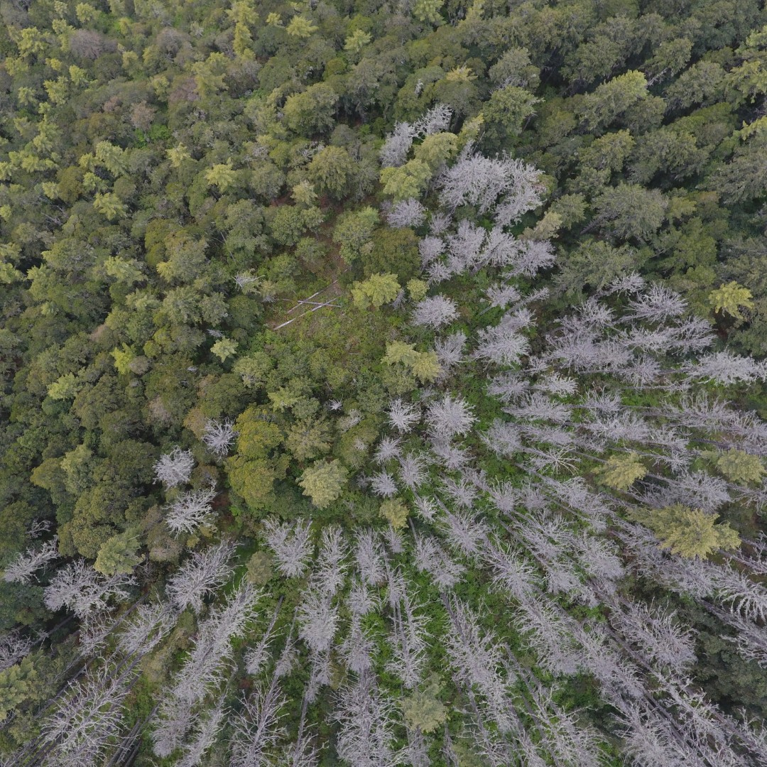 Pix4D drone challenge aerial image of dead trees in a forest