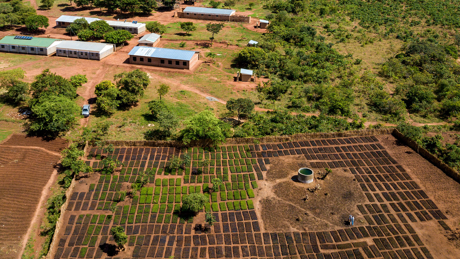 view of the reforestation projects