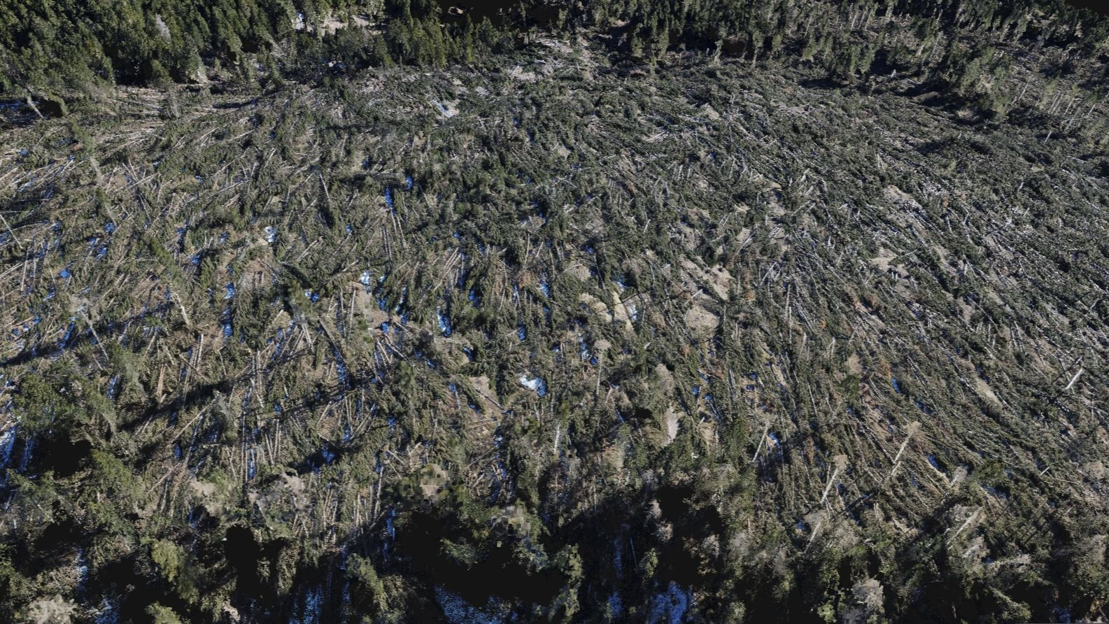 3D model created with drones of the Paneveggio Natural Park Italy after a windstorm