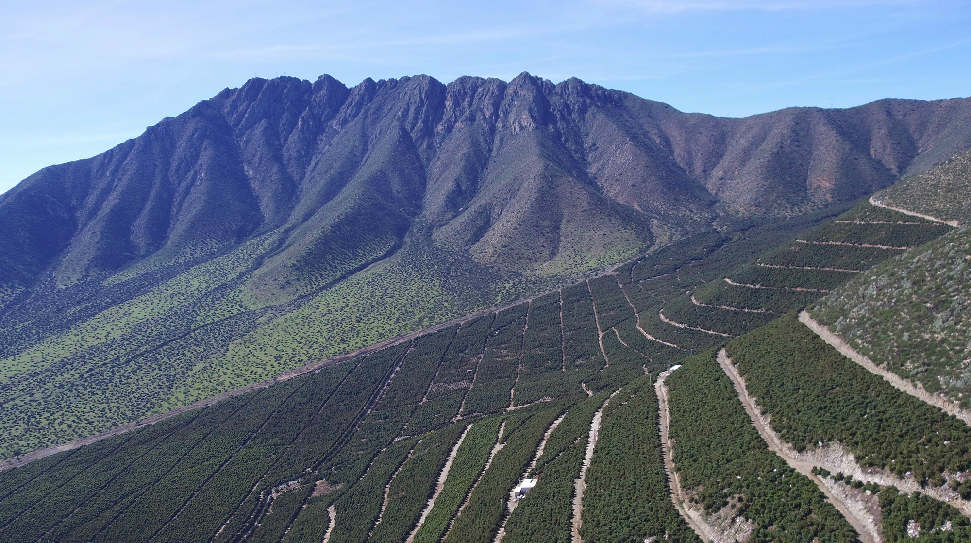 avocado orchards on hilly slopes in San Felipe Valley