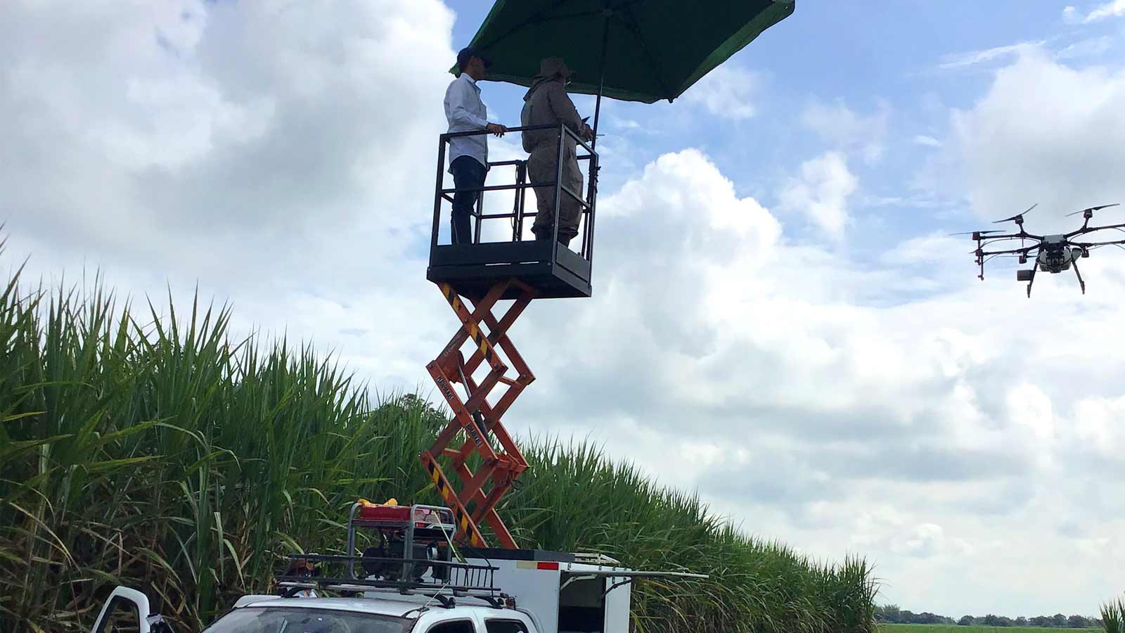 applying the ripening agent with a spraying drone according to the locations identified on the variable rate application map