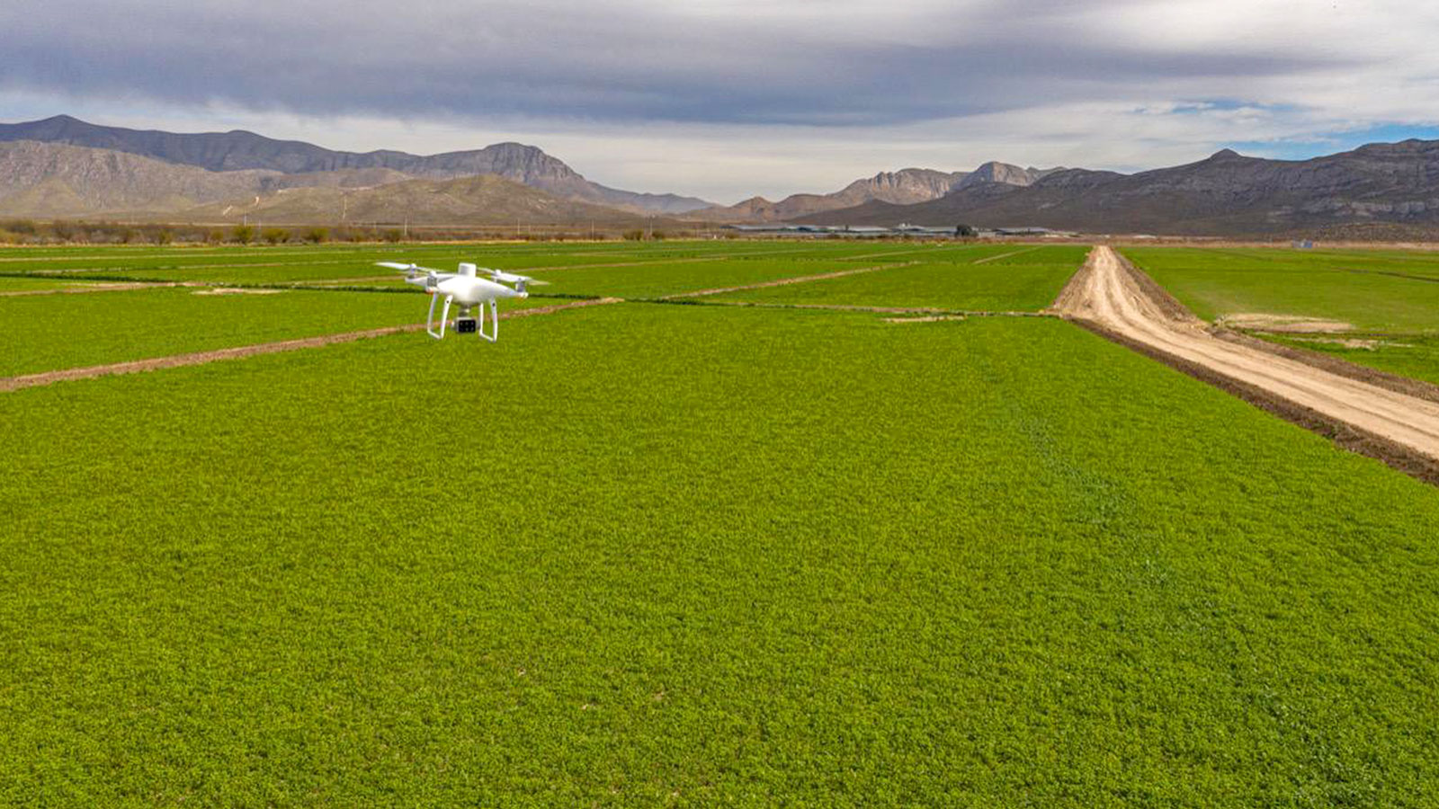 HEA BLO AGR Drone-mapping-for-analyzing-animal-feed-crops