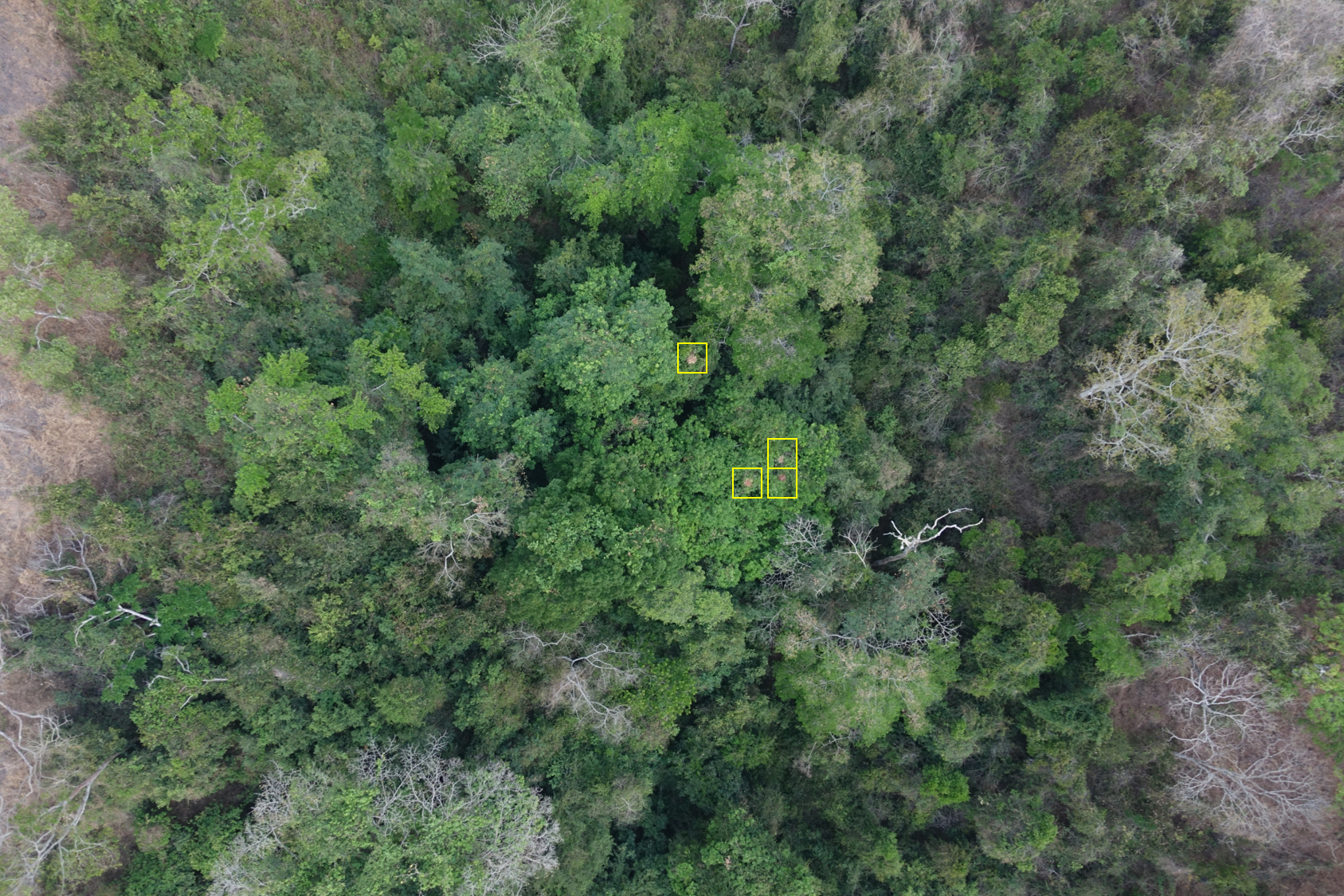 Chimpanzee nests highlighted from the air.