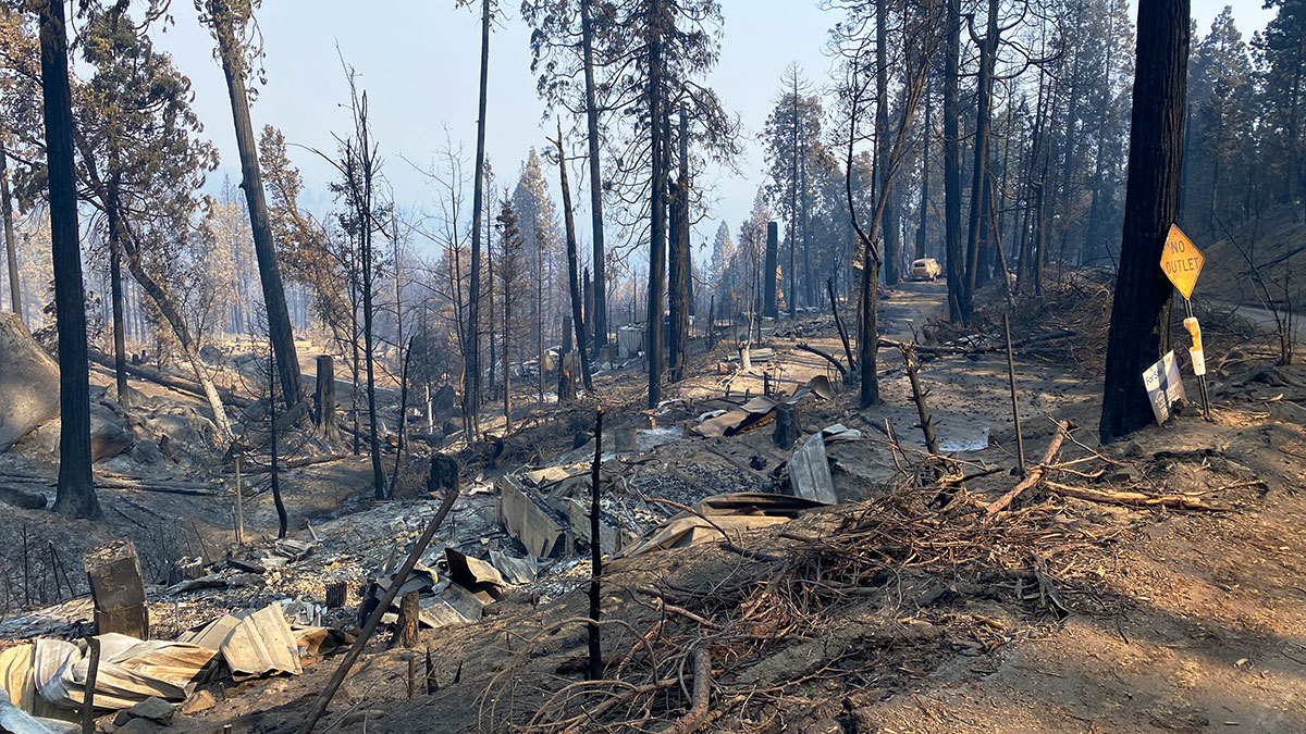 burned forest after the Californian wildfires