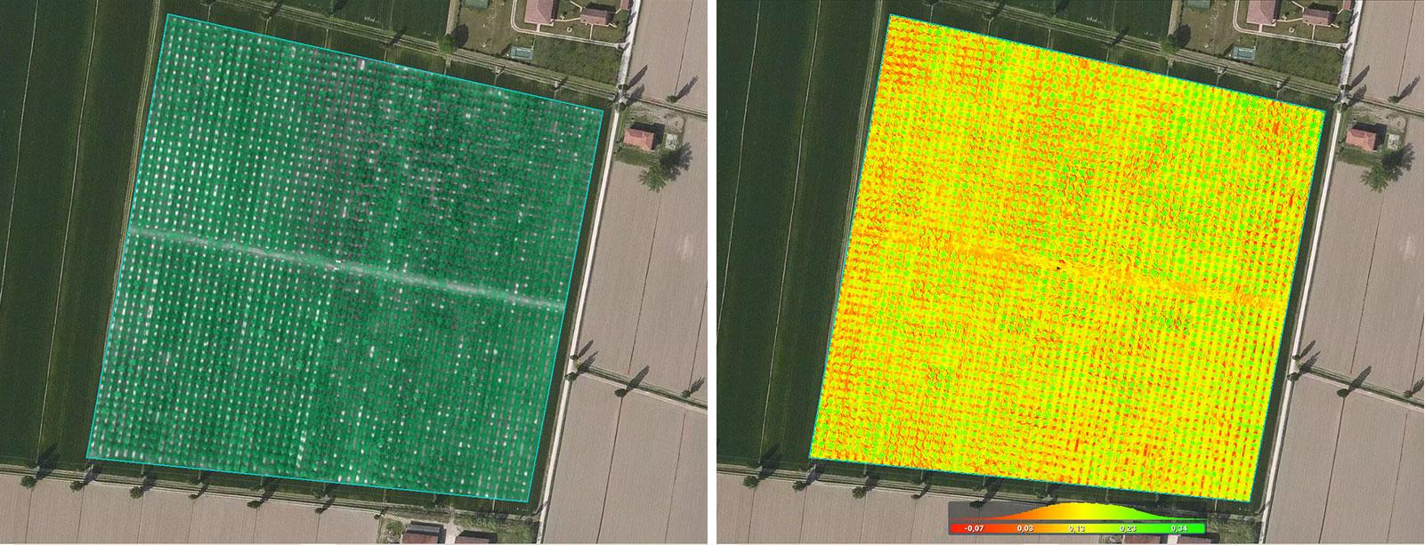 walnut tree mapping in Pix4Dfields