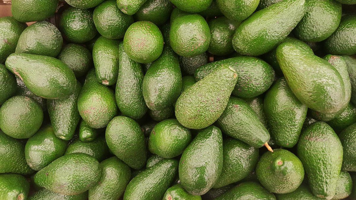 avocado-2351191 1920