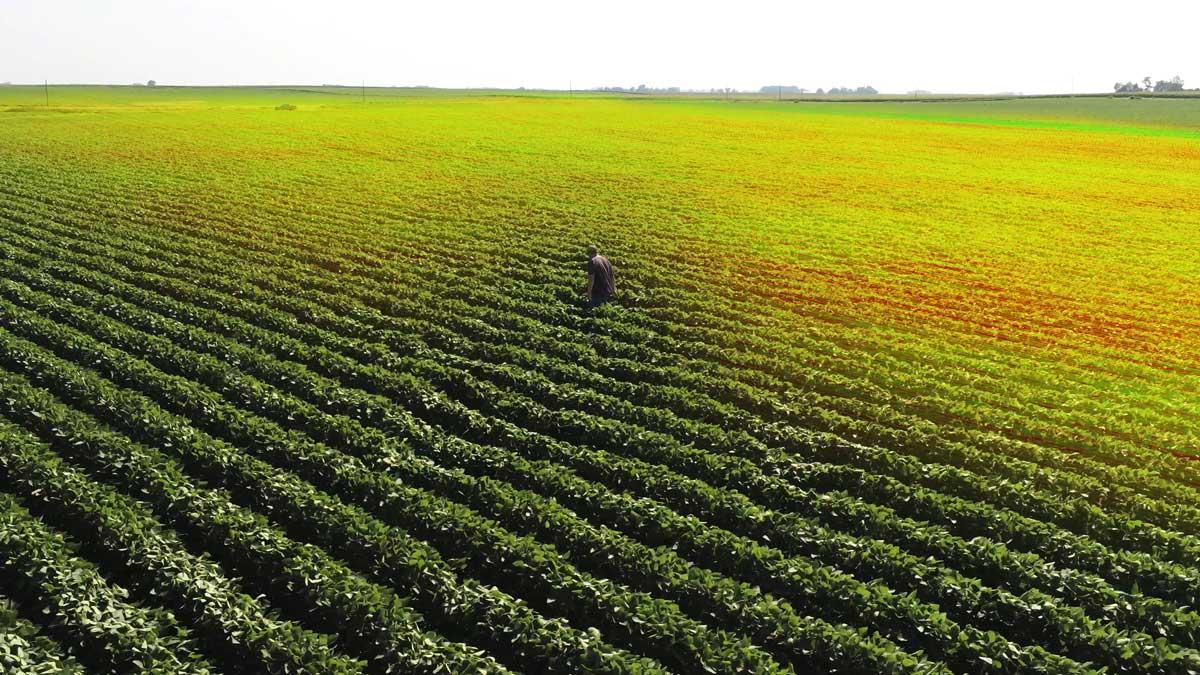 Pix4D webinar for digital agriculture workflows