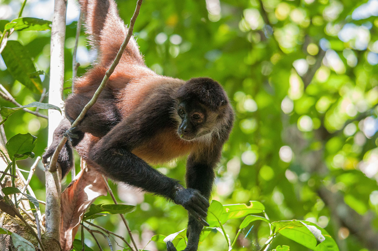 pix4d-use-case-preserving-spider-monkey-environmental-monitoring