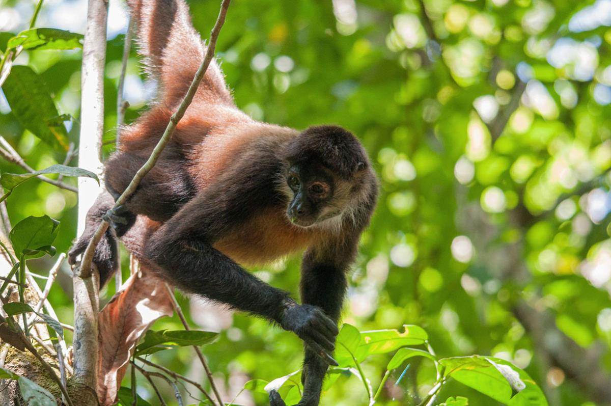 pix4d-use-case-preserving-spider-monkey-environmental-monitoring