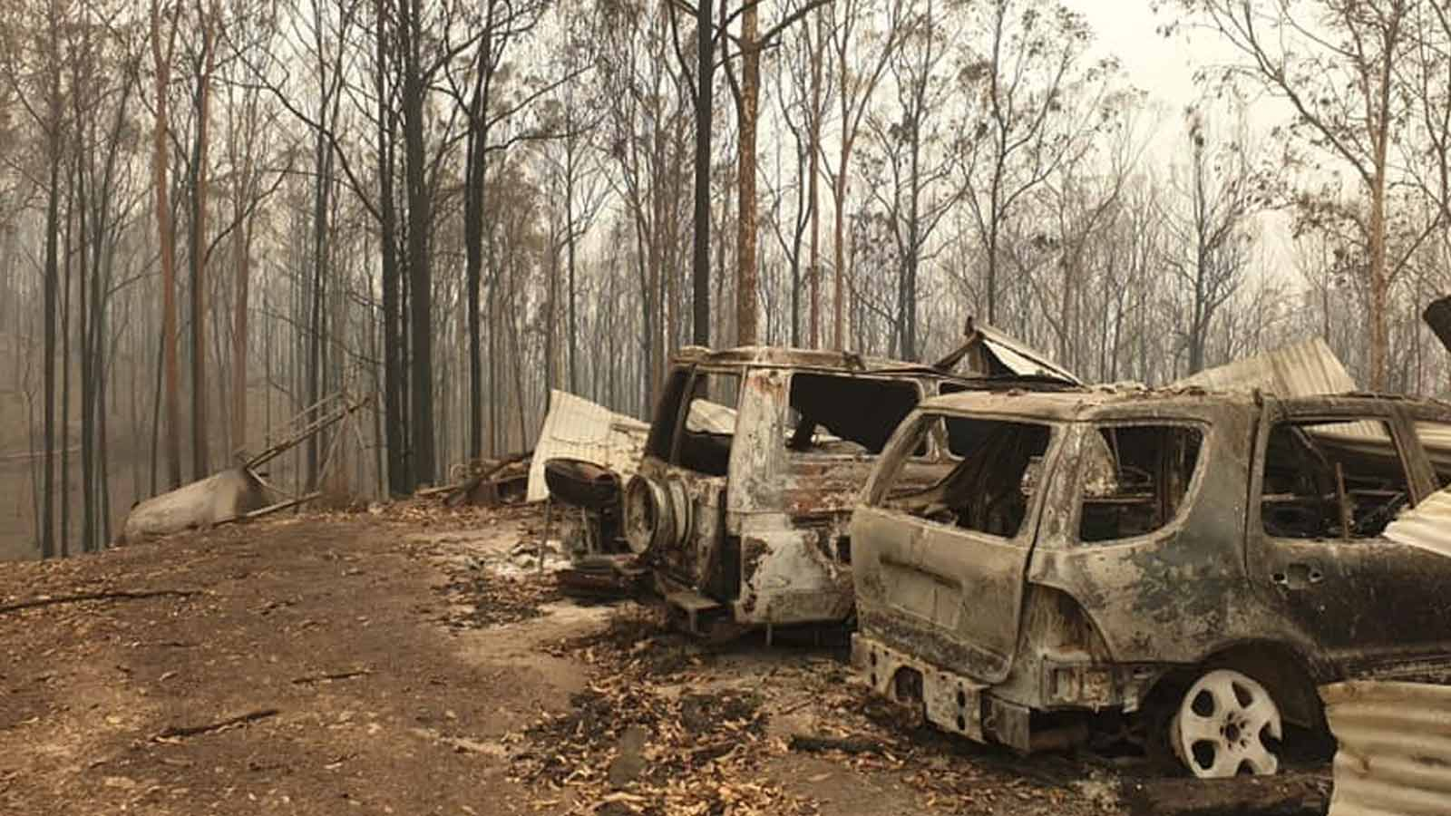 burned trees and cars after Australian bushfires