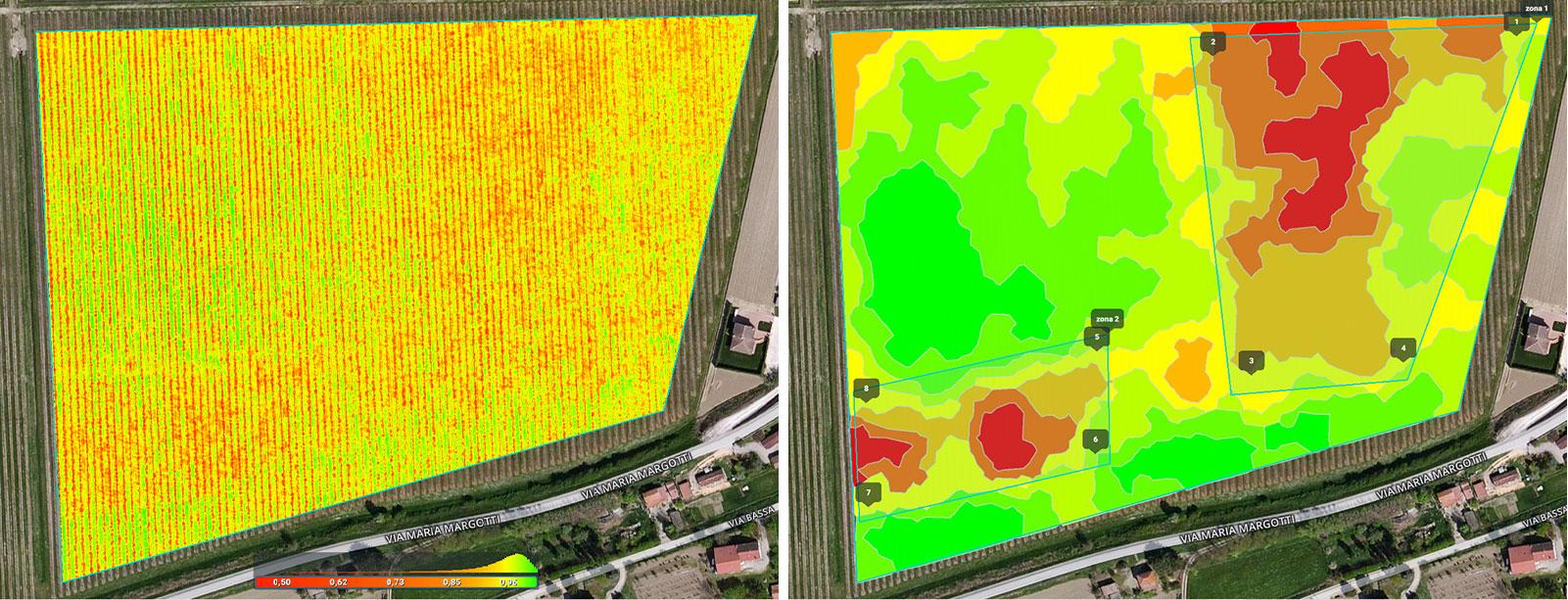 vineyard mapping in Pix4Dfields