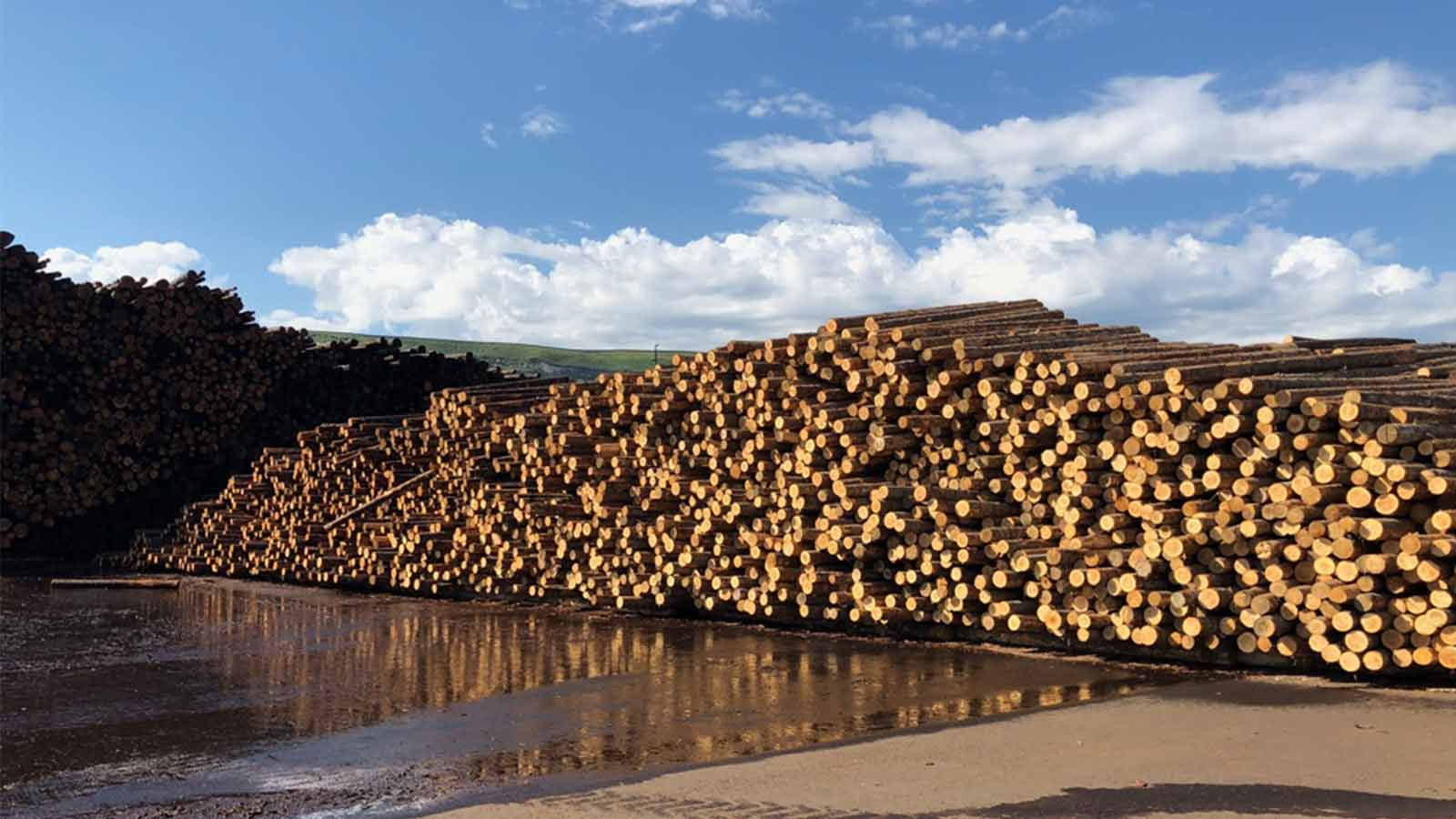 a-large-stockpile-at-a-lumber-yard