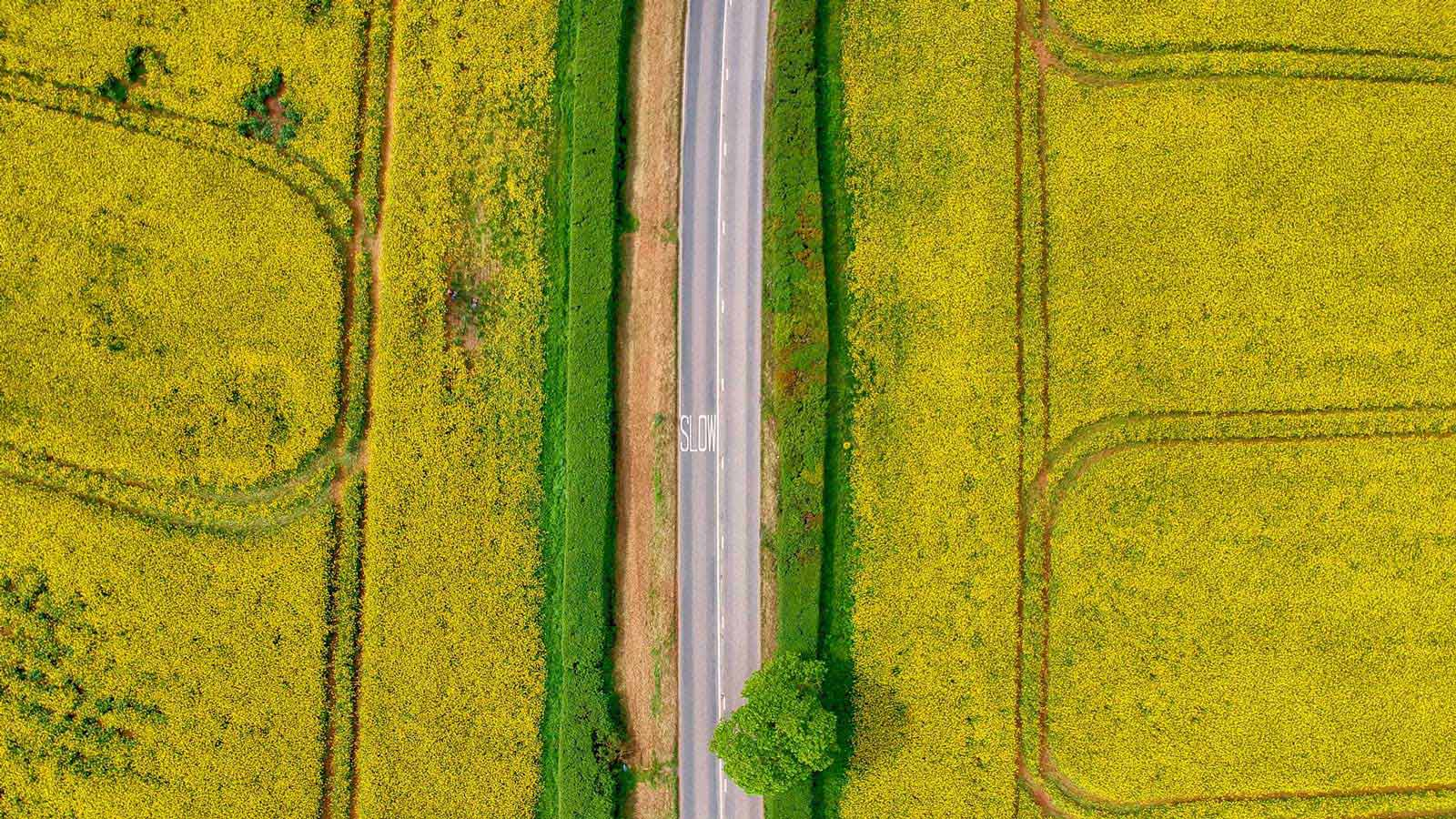 Rapeseed oil field drone map