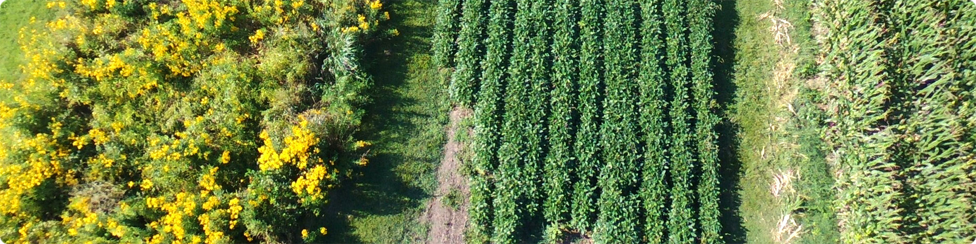 Trial plot management in agriculture