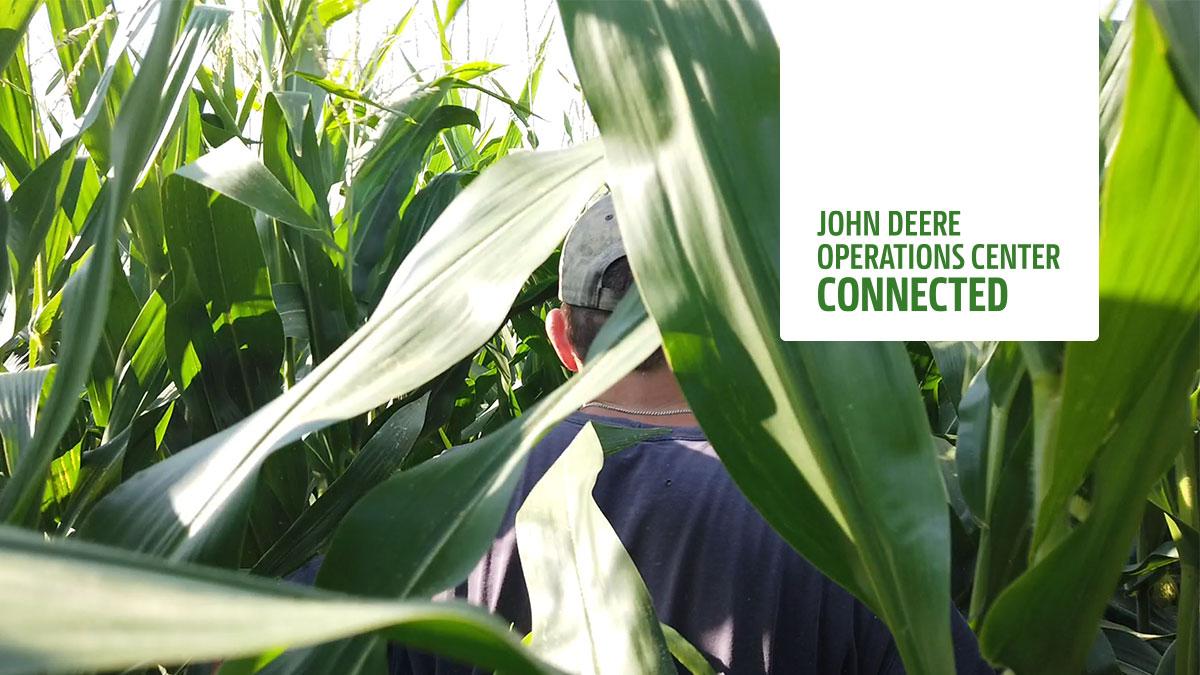 Close-range picture of a corn field