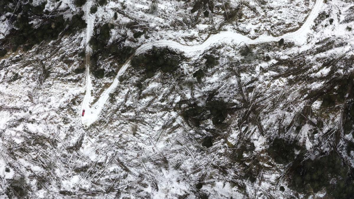 3D model created with drone mapping of the Paneveggio Natural Park after a windstorm