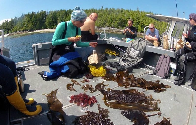 The Hakai Institute team examining kelp on the Central Coast