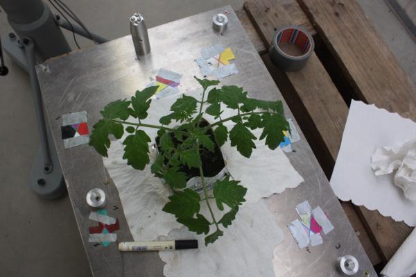 Pix4D-agriculture-ndvi-plant-08