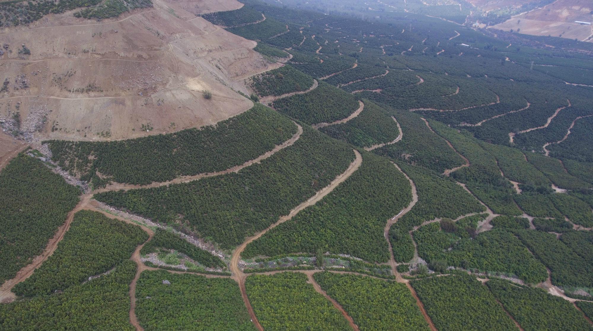 avocado orchard level curves in San Felipe Valley