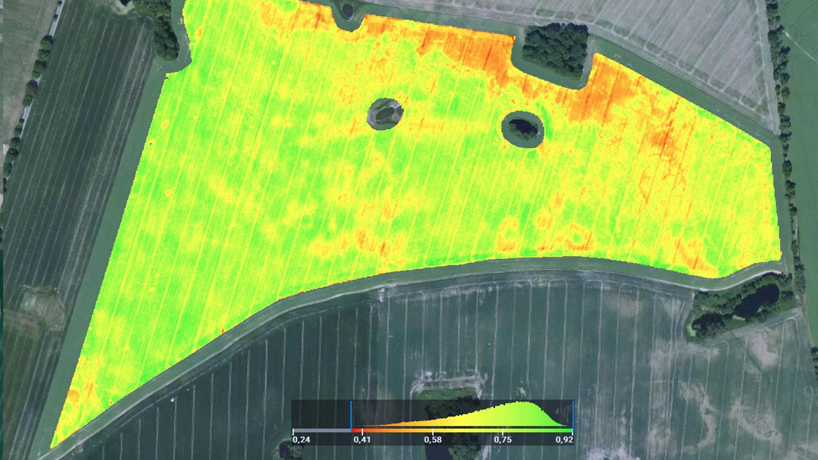 NDVI: Die Chlorophylllverteilung des Weizenfelds ist im NDVI-Spektrum