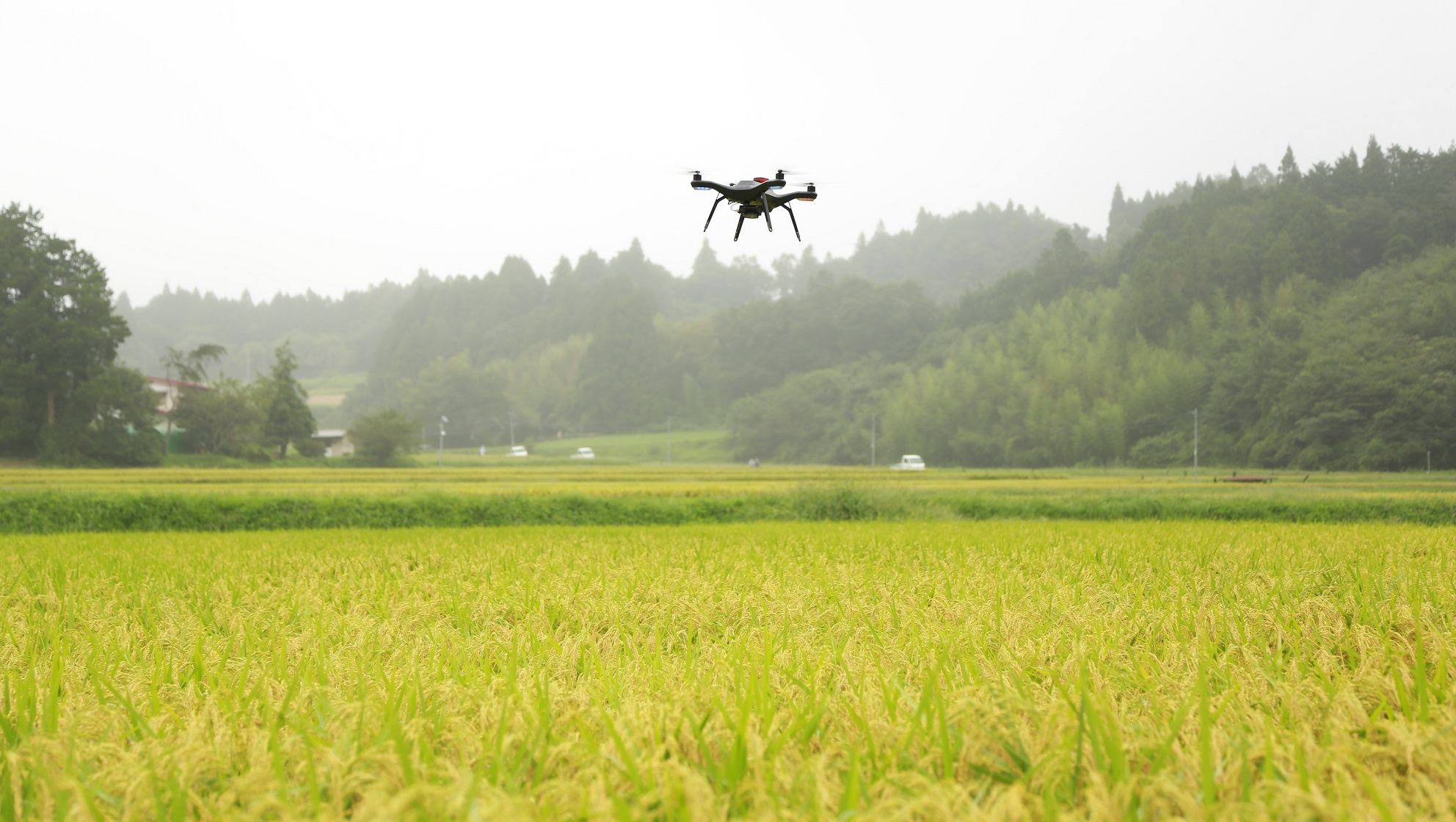 A 3DR Solo flying over the rice field
