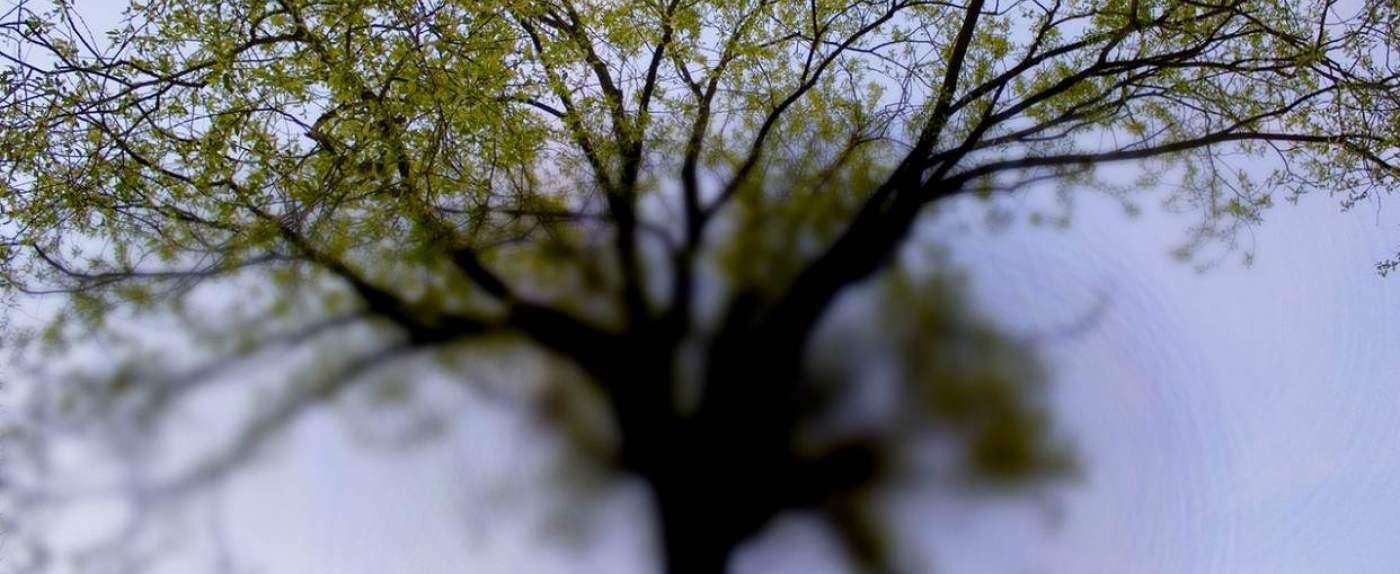 Ustka po drzewach