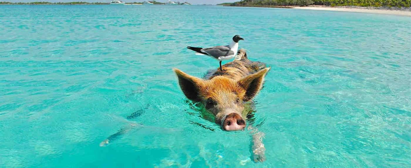 wyspy swinki