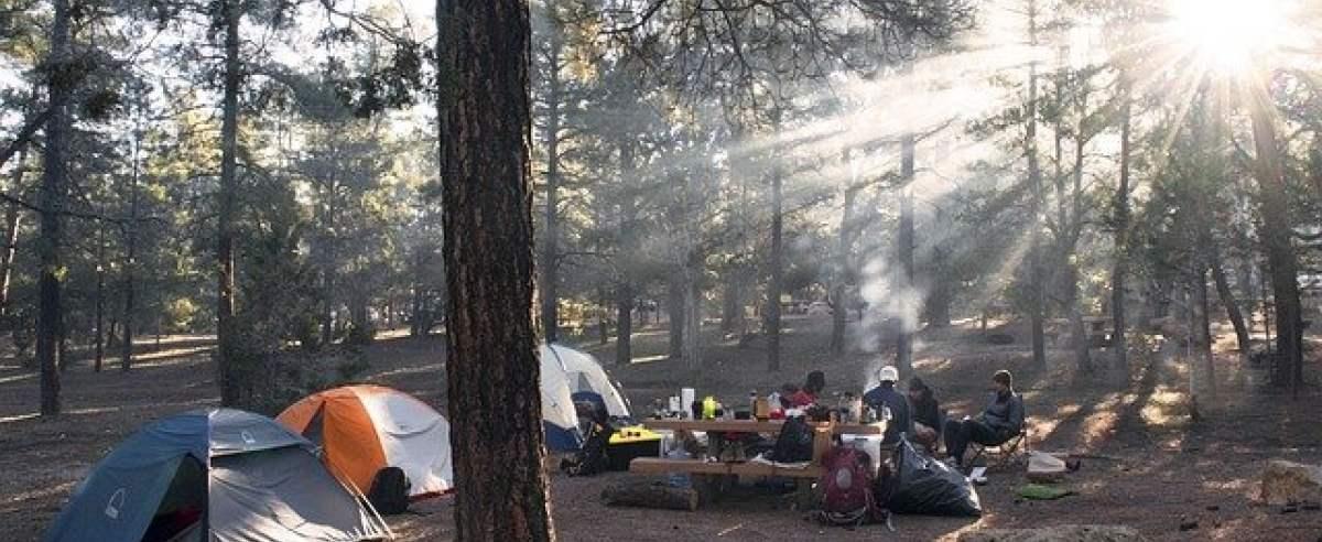 zmiany w polskich lasach - w każdym nadleśnictwie będzie obszar do nocowania na dziko