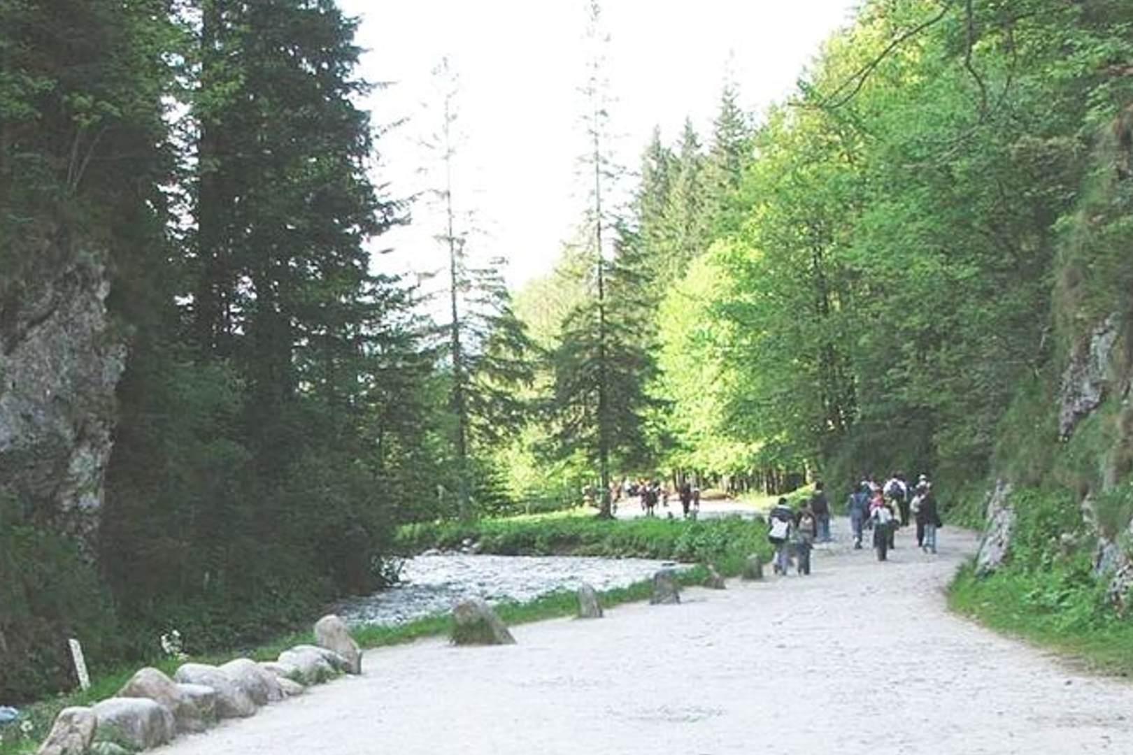 Rodzina w Tatrach deptała krokusy