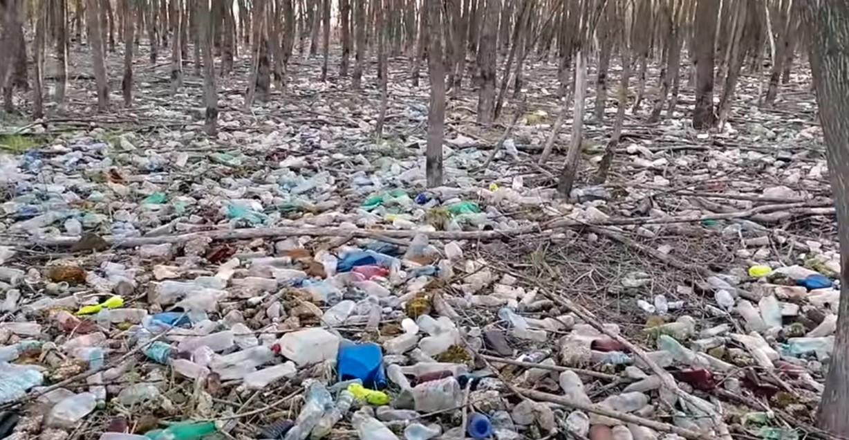 śmieci nad jeziorem